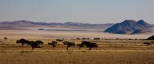 Landscapes - South plains