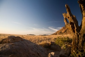 Landscapes - savanna and blue skies