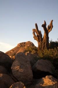 Landscapes - dead euphorbia in rocks