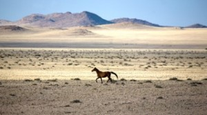 Landscapes - Wild horse of the Namib