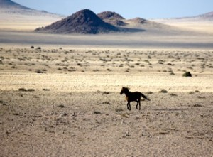 Landscapes - Wild horse of the Namib 2