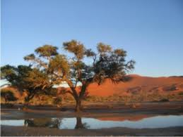 Landscapes - Sossus water in the dead vlei